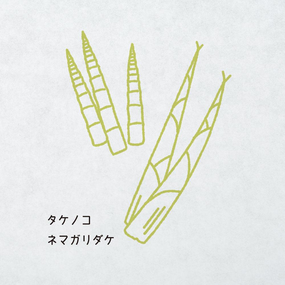タケノコ・ネマガリダケ